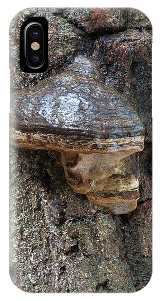 Hoof Or Tinder Fungus Phone Case by Nigel Downer