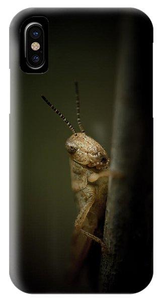 Grasshopper iPhone Case - hop by Shane Holsclaw