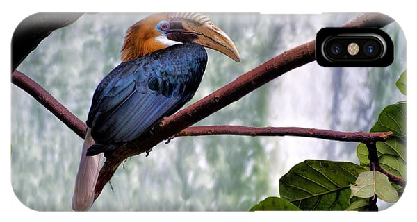 Hornbill In Paradise IPhone Case