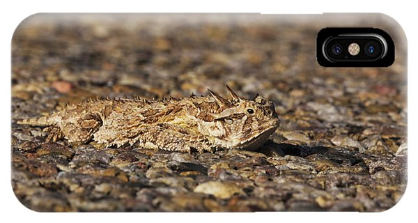 Horned Toad IPhone Case