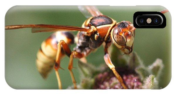 IPhone Case featuring the photograph Hornet On Flower by Nathan Rupert
