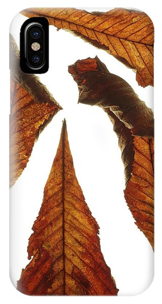 Horse Chestnut Leaves Phone Case by Science Photo Library