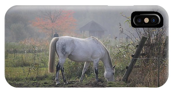 Horse On A Peaceful Day IPhone Case