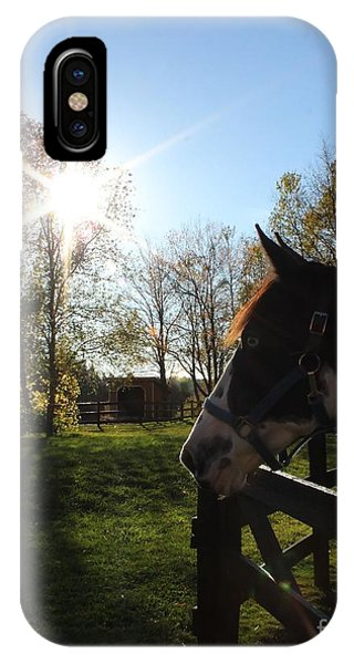 Horse With Sunburst IPhone Case