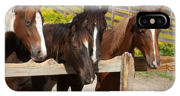 Horses Behind A Fence IPhone Case
