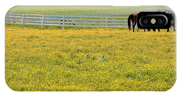 Horses Grazing In Field IPhone Case