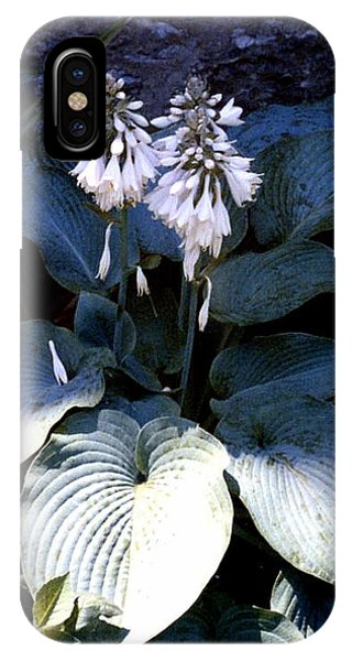 Hosta In Bloom IPhone Case