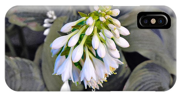 Hosta Ready To Bloom IPhone Case