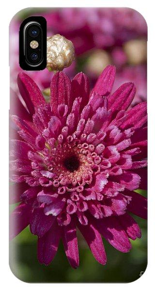 Hot Pink Chrysanthemum IPhone Case