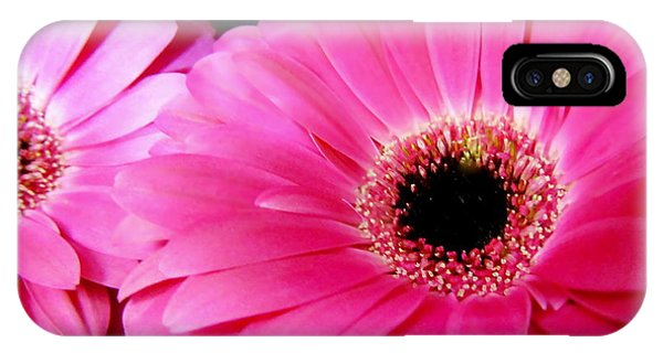 Hot Pink Gerber Daisies Macro IPhone Case
