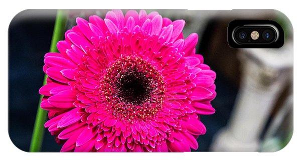 Hot Pink Gerber Daisy IPhone Case
