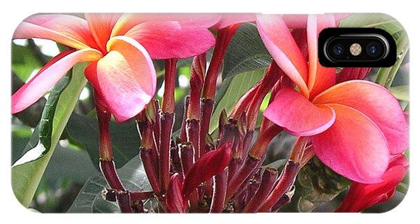 Hot Pink Plumeria IPhone Case