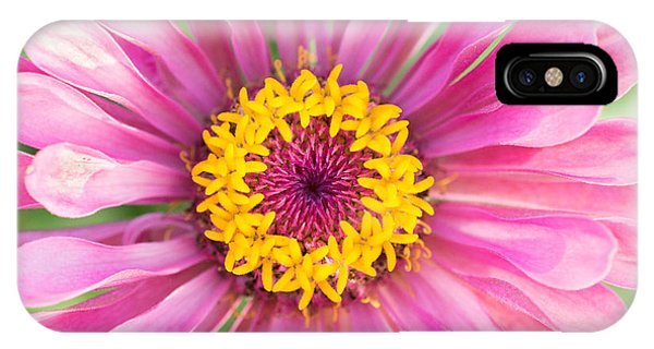 Hot Pink Zinnia IPhone Case