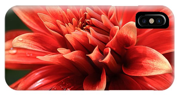 Hot Tamale Dahlia IPhone Case