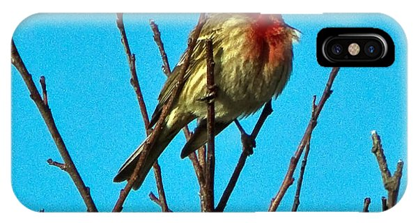 House Finch Phone Case by Constantine Gregory