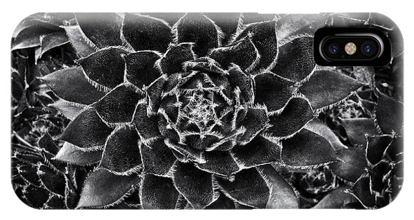 Horticulture iPhone Case - Houseleek Monochrome by Tim Gainey