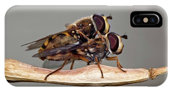 Hover Flies Mating Phone Case by Dr. John Brackenbury/science Photo Library