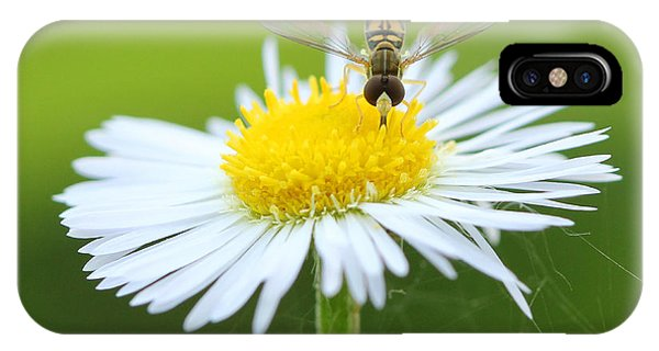 Hoverfly On Flower Phone Case by Brian Magnier
