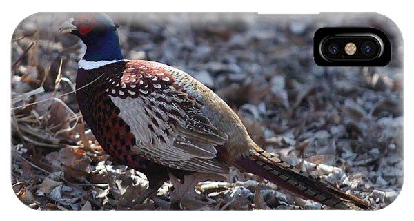 Howard County Pheasant IPhone Case