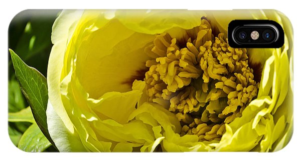 Huge Yellow Flower IPhone Case