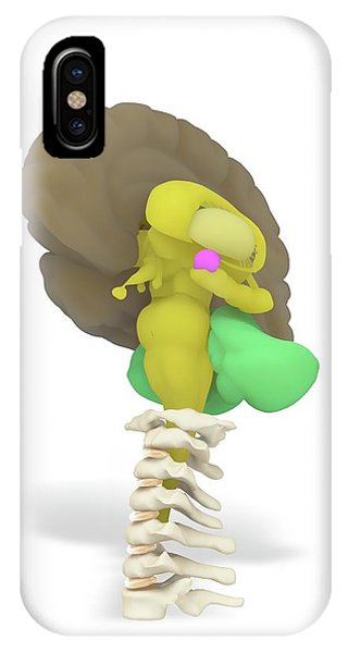 Brainstem iPhone Case - Human Brain And Limbic System by Ramon Andrade 3dciencia