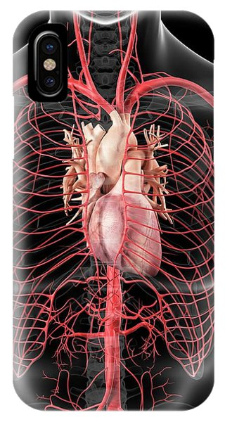 Human Heart And Arteries Phone Case by Sciepro