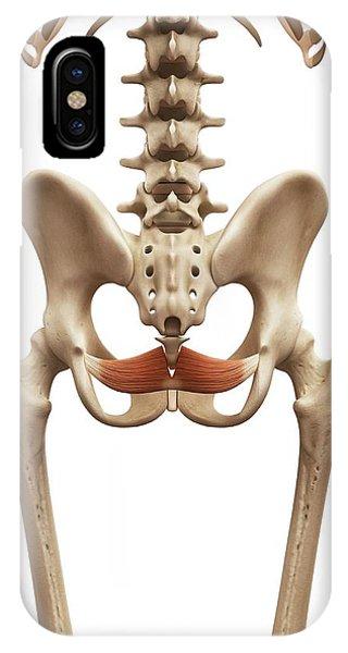 Human Pelvic Muscle Phone Case by Sebastian Kaulitzki
