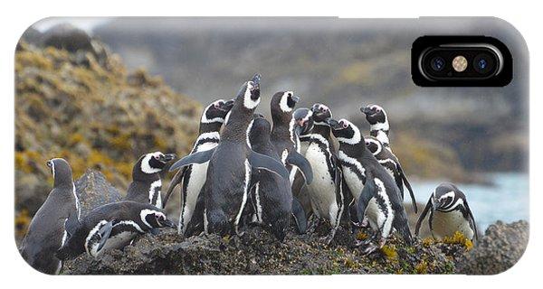 Humboldt Penguins Phone Case by Eric Dewar