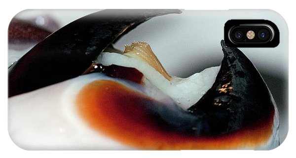 Squid iPhone Case - Humboldt Squid Beak by Louise Murray/science Photo Library