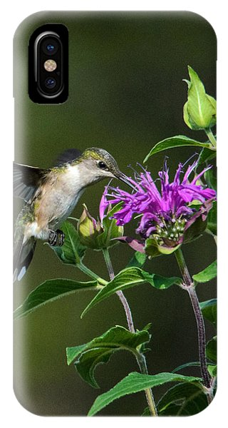 Hummer On Bee Balm IPhone Case