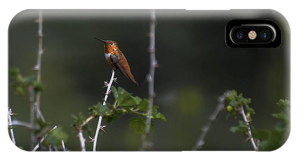 The Guardian  -rufous- IPhone Case