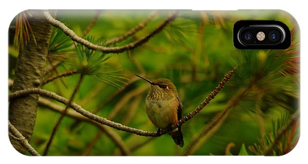 Little Things iPhone Case - Humming Birds Perched  by Jeff Swan