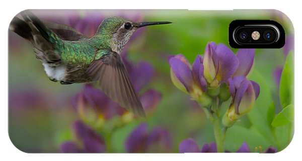 Humming Bird iPhone Case - Humming In The Garden by Angie Vogel