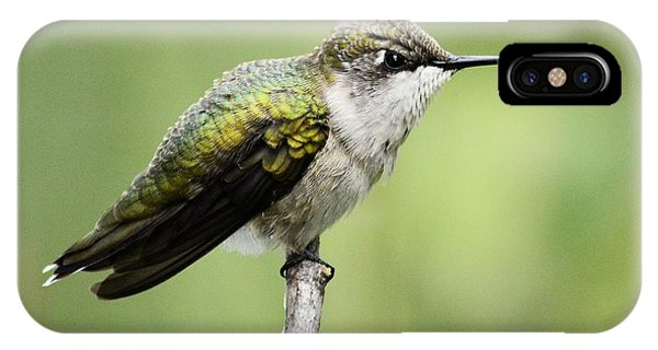 Hummingbird 3 IPhone Case
