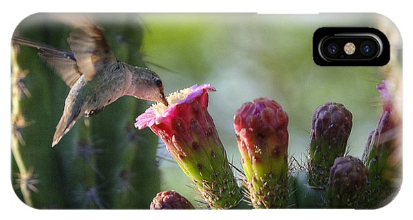 Hummingbird Breakfast Southwest Style  IPhone Case