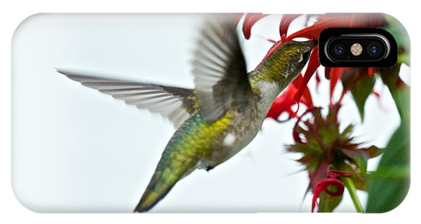 Hummingbird Focused On The Scarlet Bee Balm IPhone Case