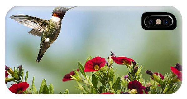 Humming Bird iPhone Case - Hummingbird Frolic With Flowers by Christina Rollo