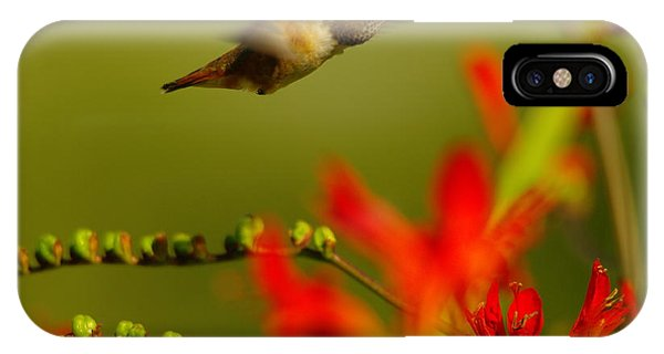 Little Things iPhone Case - Hummingbird In A Rush by Jeff Swan