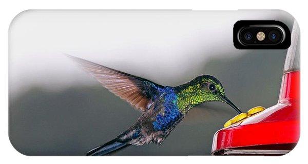 Mallard iPhone Case - Hummingbird by Carey Chen