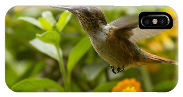 Hummingbird Looking For Food IPhone Case