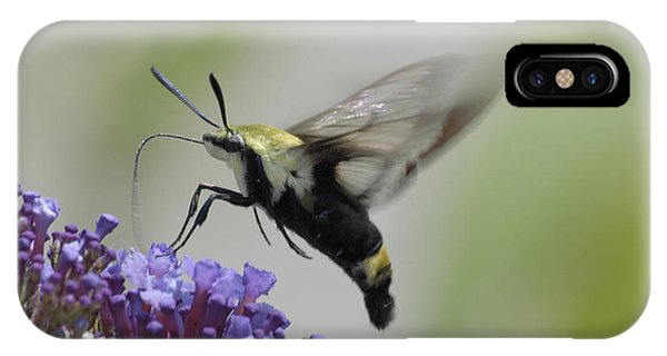 Hummingbird Moth IPhone Case