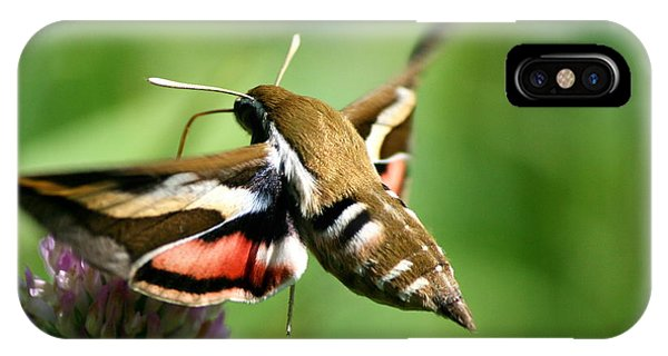 Hummingbird Moth From Behind IPhone Case
