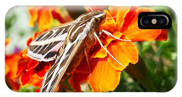 Hummingbird Moth On A Marigold Flower IPhone Case