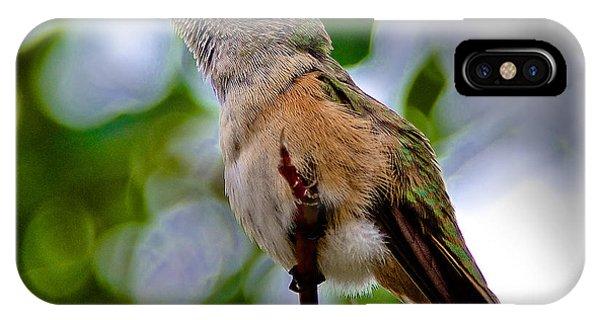 Hummingbird On A Branch IPhone Case