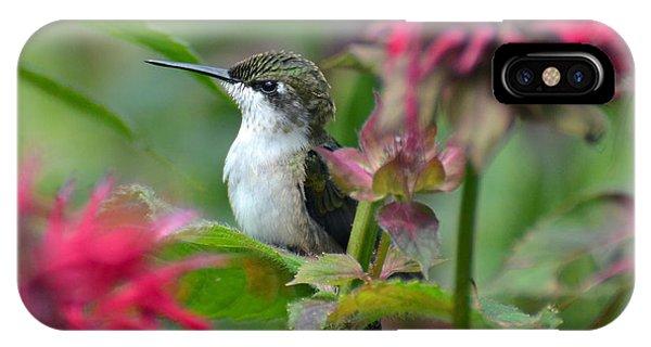 Hummingbird On A Leaf IPhone Case