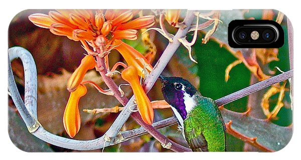 Hummingbird On Aloe In Living Desert In Palm Desert-california IPhone Case