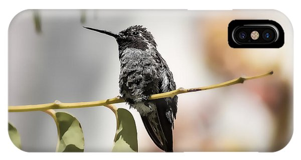 Hummingbird On Branch IPhone Case