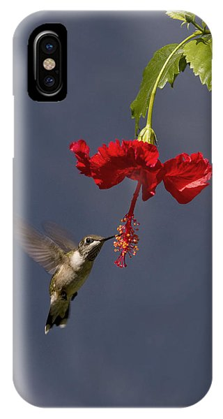 Hummingbird On Hibiscus IPhone Case