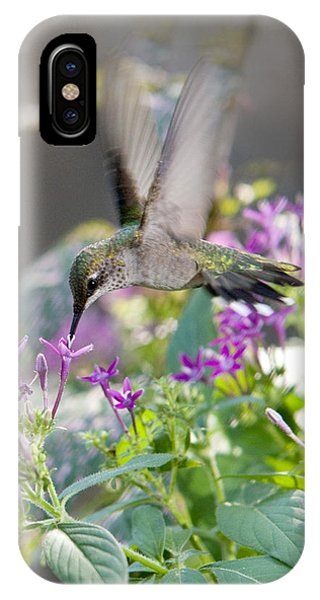 Hummingbird On Penta IPhone Case