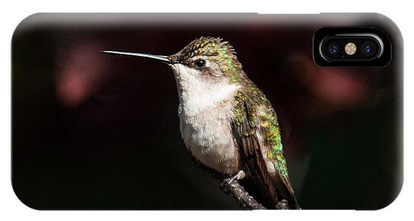 Stop Action iPhone Case - Hummingbird Portrait by Lara Ellis
